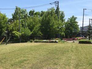 公園:花畑
