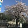 本格的な春の訪れ
